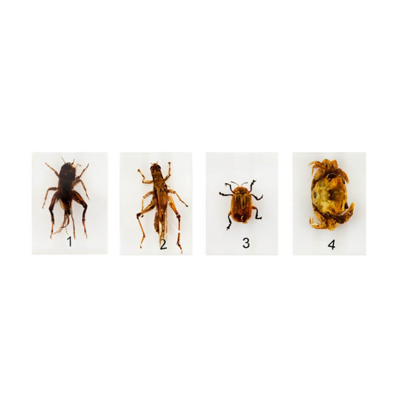 Animal Specimen Set 1